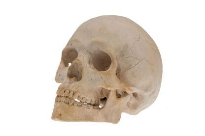 Memento Mori, Skull, Totenkopf