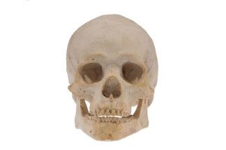 Memento Mori, Skull, Totoenkopf, Totenschädel