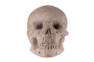 Memento Mori Totenkopf Skull